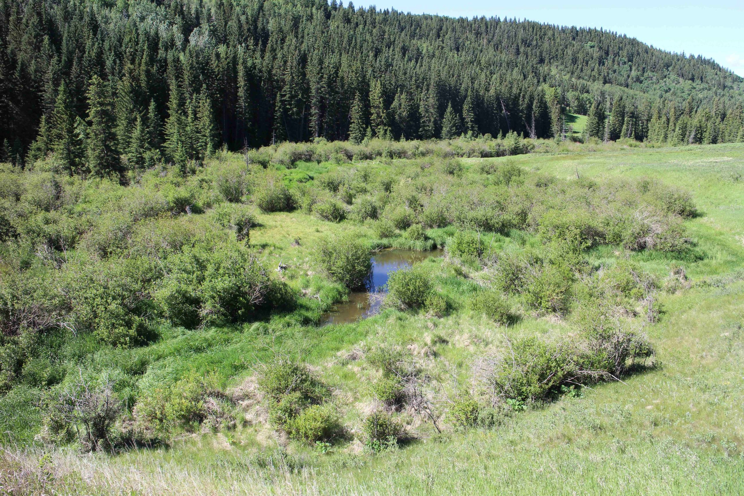 Bighill Creek Walk in the Watershed