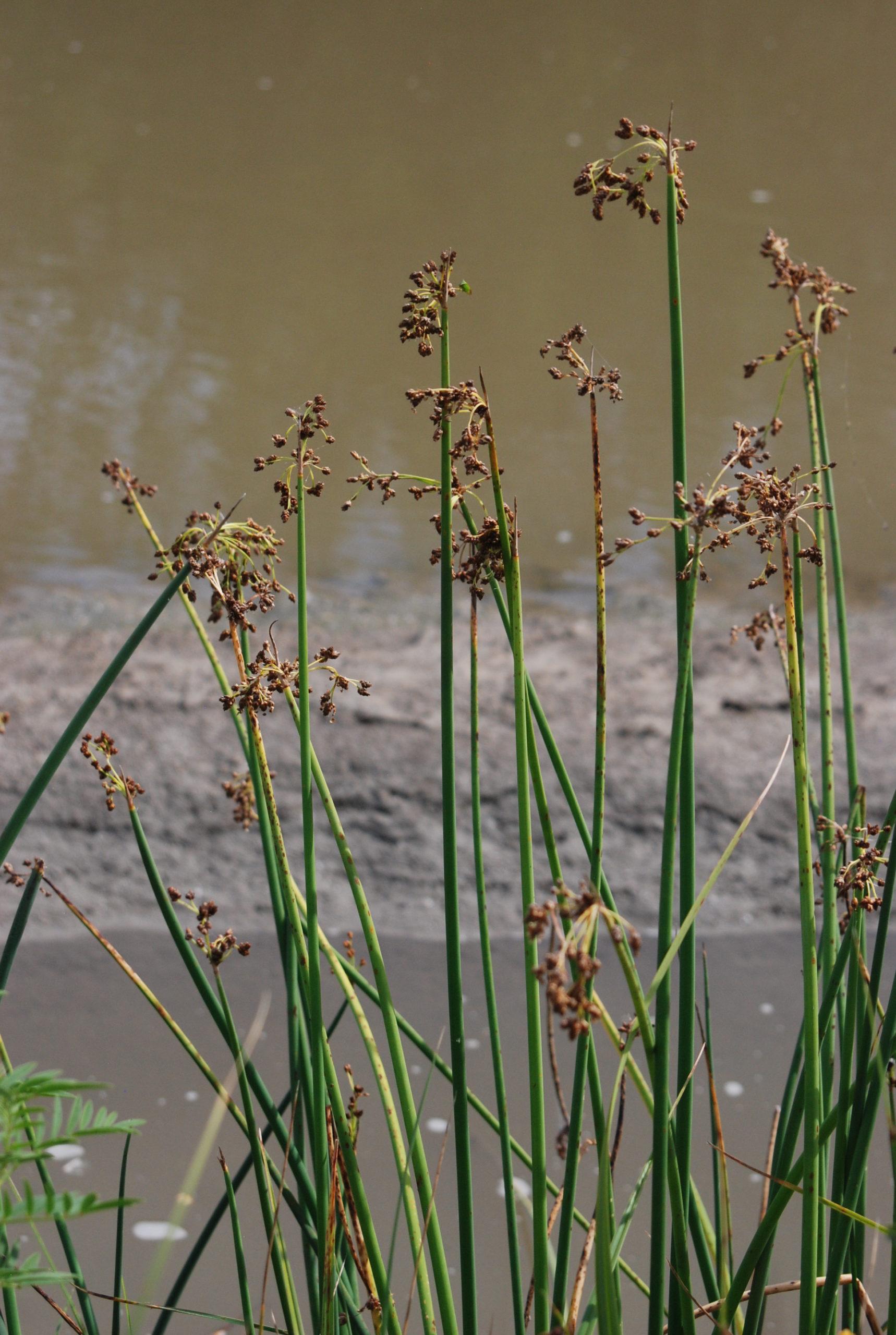 Creekfest Reimagined - Common Riparian Plants of Alberta Webinar